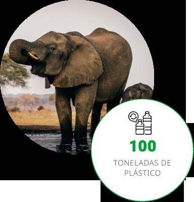 Isso equivale ao peso de 19 elefantes adultos | Instituto Barigui